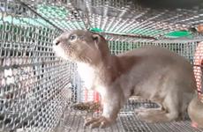 Người dân Việt Nam ủng hộ đóng cửa chợ buôn bán động vật hoang dã