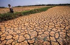 Dồn lực tìm nước, chống mặn giúp Vựa lúa số 1 Việt Nam 'vượt hạn'
