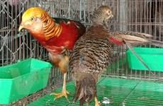 Ra mắt phim ngắn dừng gây nuôi thương mại động vật hoang dã nguy cấp
