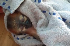 Nhiều cá thể động vật hoang dã quý, hiếm được giải cứu trong tháng Năm
