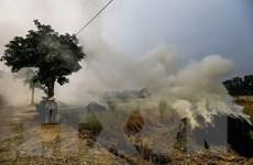Sau cảnh báo gia tăng ô nhiễm về đêm, Hà Nội kiểm tra đốt rơm rạ
