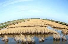 Thành lập Hội đồng điều phối vùng đồng bằng sông Cửu Long