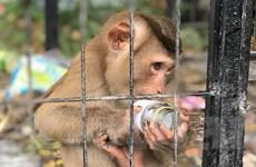 4 đối tượng vận chuyển động vật hoang dã trái phép bị xử 48 năm tù