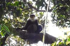 Phát hiện quần thể động vật hoang dã quý hiếm cần bảo tồn tại Kon Tum