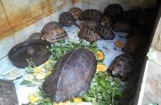 10 hành động cấp bách để ngăn chặn buôn bán động vật hoang dã