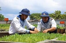 Ngắm ''bức tranh thôn quê'' đầy sắc xanh trên quần đảo Trường Sa
