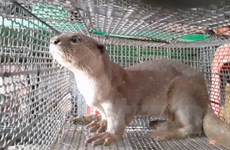 Bảo vệ các loài động vật hoang dãvì 'ngôi nhà chung' đa dạng sinh học