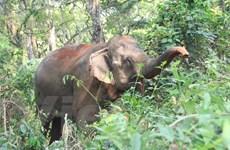 Động vật hoang dã dần tuyệt chủng khiến cuộc sống con người bị đe dọa