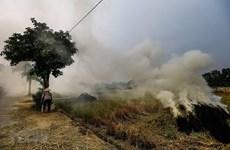 Đề nghị xử lý nghiêm việc đốt rơm rạ không đúng quy định, gây ô nhiễm