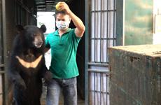 Cứu hộ 4 cá thể gấu cuối cùng tại Rạp xiếc Trung ương Hà Nội