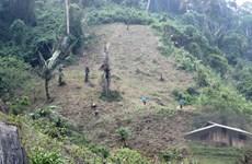 Đề nghị rà soát chuyển đổi đất trồng lúa, đất rừng phòng hộ làm dự án