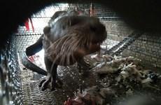 Bất chấp đại dịch, buôn bán động vật hoang dã vẫn không thuyên giảm