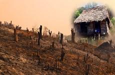 'Giải phóng' đất nông lâm trường: Cần 'cuộc cách mạng' quyết liệt hơn