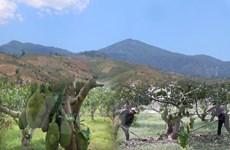 Cần điều chỉnh mức khoán bảo vệ rừng để người dân vươn lên thoát nghèo