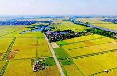 Bộ TN-MT nói về đề xuất giảm diện tích đất lúa, tăng khu công nghiệp