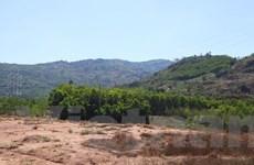 Chuyên gia 'mổ xẻ' việc cả nước còn gần 3 triệu ha rừng 'chưa có chủ'