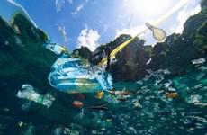 Giảm đồ nhựa dùng 1 lần: Việc cần làm ngay từ mỗi cá nhân, gia đình