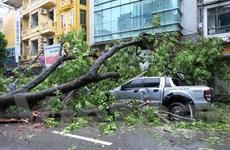 """Hà Nội: Mưa lớn, cây cổ thụ bật gốc, """"hạ gục"""" 2 ôtô và 6 xe máy"""