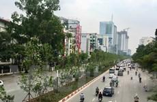 Háo hức chờ những hàng phong lá đỏ sắp tỏa bóng mát ở thủ đô Hà Nội