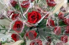Đà Nẵng: Thị trường hoa, quà tặng 20/11 vắng khách