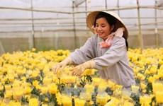Đà Lạt sẽ là trung tâm trồng rau-hoa đẳng cấp quốc tế