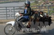 Campuchia phát hiện thêm hai ca nhiễm virus H5N1