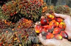 Nhập khẩu dầu cọ của Ấn Độ giảm mạnh do giá cao