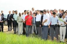 Thủ tướng thị sát mô hình hợp tác trồng lúa tại Cuba