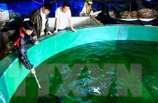 Lào Cai xây thêm 20 điểm cung ứng giống thủy sản sạch