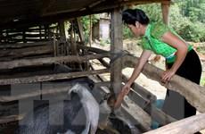 Sức sống mới trên huyện Điện Biên Đông hôm nay