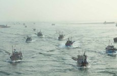 Đà Nẵng đưa nhiều tàu công suất lớn vươn khơi, bám biển