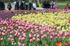 Thủ đô Ottawa rực rỡ trong lễ hội hoa tulip lớn nhất thế giới