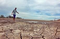 Bình Định: Nhiều địa phương khô hạn, thiếu nước trầm trọng