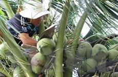 Bến Tre có thêm 6 thị trường mới xuất khẩu các sản phẩm dừa