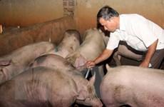Hà Nội tăng cường giám sát chặt chẽ dịch bệnh trên đàn gia súc