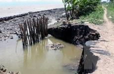 Cà Mau: Mưa dông gây sạt lở nghiêm trọng toàn tuyến đê biển Tây