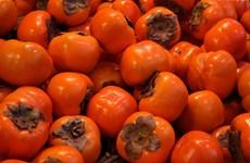 Lâm Đồng: Các loại trái hồng Đà Lạt tiếp tục rớt giá dù được mùa