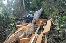 Kiểm lâm, công an bảo kê cho phá rừng, khai thác vàng ở Kim Hỷ?