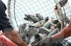 Việt Nam-Nga ưu tiên hàng đầu về phát triển nuôi trồng thủy sản
