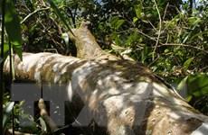 Hà Tĩnh: Cần xử lý các đối tượng hành hung cán bộ bảo vệ rừng