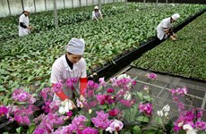 Doanh nghiệp Đài Loan đầu tư vào ngành nông nghiệp Quảng Ninh