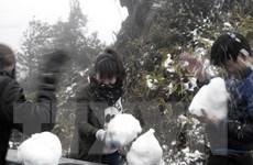 Lai Châu: Băng tuyết dày tới 10cm, nhiều nơi ách tắc giao thông