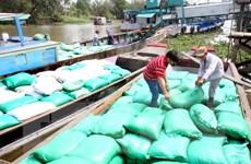 Tạm trữ là biện pháp cần thiết để điều tiết thị trường lúa gạo