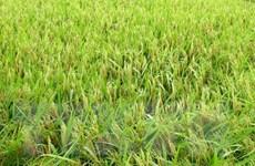 Thủ đô Hà Nội ứng dụng nhiều đề tài khoa học đạt hiệu quả cao