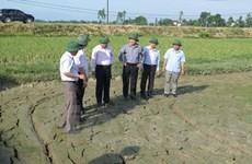 Tỉnh Nghệ An cấp bách ứng phó với hạn hán, bảo vệ cây trồng