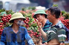 """Bắc Giang: Các đơn hàng ổn định, không có vải thiều """"dội chợ"""""""