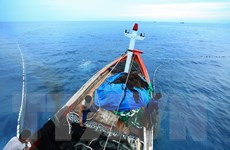 Trà Vinh hỗ trợ kinh phí mua bảo hiểm cho hơn 130 chủ tàu cá