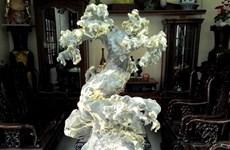 """""""Hô biến"""" những khối đá xù xì thành tác phẩm bonsai tinh xảo"""
