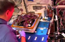 Các nhà du hành vũ trụ lần đầu tiên nếm thử rau trồng trên ISS