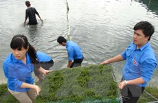 Đà Nẵng và tỉnh Salavan của Lào tăng hợp tác công tác thanh niên